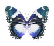 Azul da borboleta imagem de stock