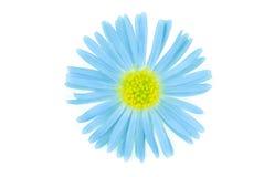 Azul de la flor isoalted Imagen de archivo libre de regalías