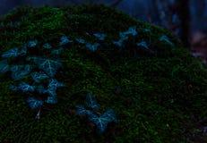 Azul de la hiedra en musgo verde en bosque oscuro del otoño Imágenes de archivo libres de regalías