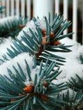 Azul e branco Imagens de Stock Royalty Free