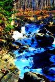 Azul extremo da floresta Imagens de Stock Royalty Free