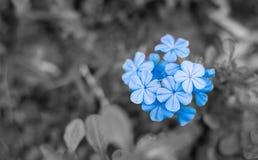 Azul - flores púrpuras imágenes de archivo libres de regalías
