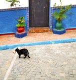 azul histórico en el estilo antiguo af de Marruecos de la puerta del edificio libre illustration
