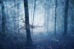 Azul mágico conto de fadas nevoento colorido da floresta imagens de stock