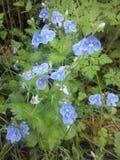 Azul minúsculo no tapete verde Fotos de Stock Royalty Free