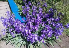 Azul, planta, flor, luz, sol, canteiro de flores, folha, grande, bonito, original, banco, parque, resto Imagens de Stock