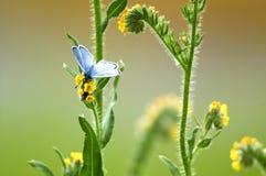 Azul prateado Imagens de Stock Royalty Free