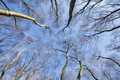 Azul rachado Imagens de Stock