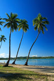 Azul tropical Imágenes de archivo libres de regalías