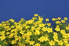 Azul un amarillo imagen de archivo libre de regalías