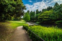 Azul verde de n en el parque de Singring fotografía de archivo