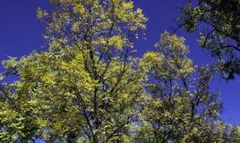 Azul, verde, e ouro fotografia de stock royalty free