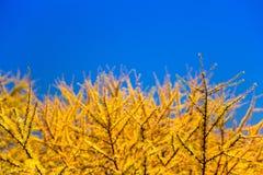 Azul y amarillo Foto de archivo libre de regalías