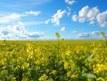 Azul y amarillo alrededor de nosotros Fotografía de archivo
