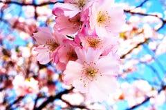 Azul y flores Fotografía de archivo