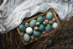 Azul, y huevos del blanco y del pollo y huevos de codornices en retro de madera Foto de archivo
