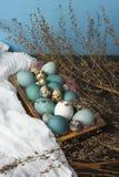 Azul, y huevos del blanco y del pollo y huevos de codornices en retro de madera Fotos de archivo