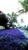 azul y púrpura Foto de archivo