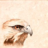 Azulejo del pájaro. imagen de archivo libre de regalías