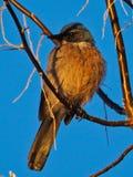 Azulejo occidental el mañana del invierno fotos de archivo libres de regalías