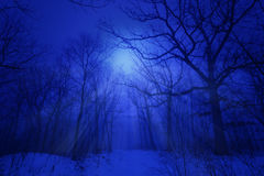 Azules del invierno Imagen de archivo libre de regalías