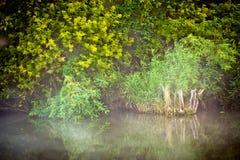 Azur des Teichs Lizenzfreies Stockbild