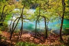 Azurblauer See durch die Bäume in Plitvice Lizenzfreies Stockfoto