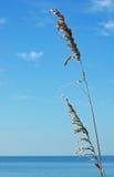 azure синь пляжа Стоковая Фотография RF