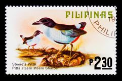 Azure-breasted Pitta Pitta steerii, Fauna - Birds serie, circa 1979. MOSCOW, RUSSIA - SEPTEMBER 3, 2017: A stamp printed in Philippines shows Azure-breasted Royalty Free Stock Photography