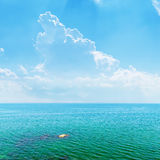 Azure sea and sky with clouds Stock Images