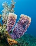 Azure vase sponge royalty free stock photos