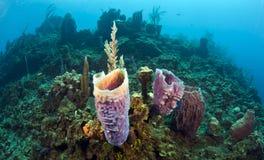 Azure vase sponge Royalty Free Stock Photo