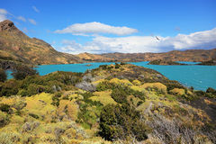 Azure water of Lake Pehoe between green  coast Royalty Free Stock Images