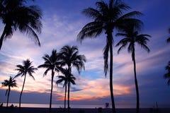 Azzurri di Miami Immagine Stock