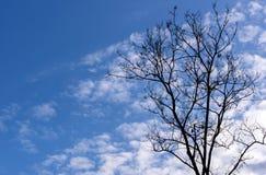 Azzurri ed albero Immagine Stock