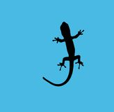 Azzurro del Gecko Fotografia Stock