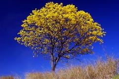 Azzurro profondo Fotografie Stock Libere da Diritti