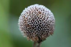 Bálsamo de abeja revestido de lujo de Frost Fotografía de archivo