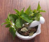 Bálsamo de limón verde y secado fresco en el mortero, herbalism, medicina alternativa fotografía de archivo