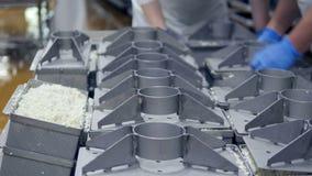 Bâche de place de travailleurs pour les bassins plats de lait caillé avant le pressurage banque de vidéos