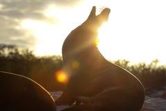 Bâillement crépusculaire Photographie stock libre de droits