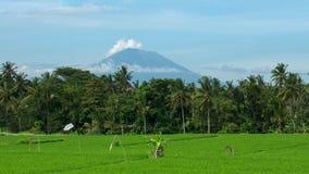Bâti Agung derrière des gisements de riz dans Ubud, Bali Photos stock