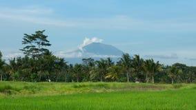 Bâti Agung derrière des gisements de riz dans Ubud, Bali Photographie stock libre de droits