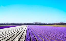 Bâti de fleur au printemps Images libres de droits
