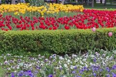 Bâti de fleur dans le jardin formel Photographie stock libre de droits