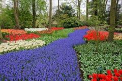 Bâti de fleur de source Images stock