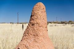 Bâti de termite Image stock