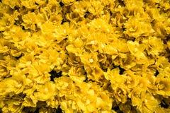Bâti des fleurs photo stock