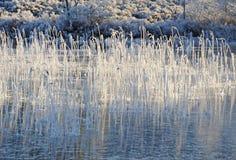 Bâti glacial d'étang et de roseau. photographie stock libre de droits