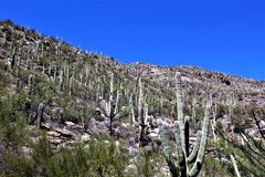 Bâti Lemmon, Tucson, Arizona, Etats-Unis photo libre de droits